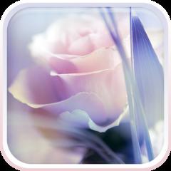 Rosa Sfondo Animato 31 Scarica Apk Per Android Aptoide