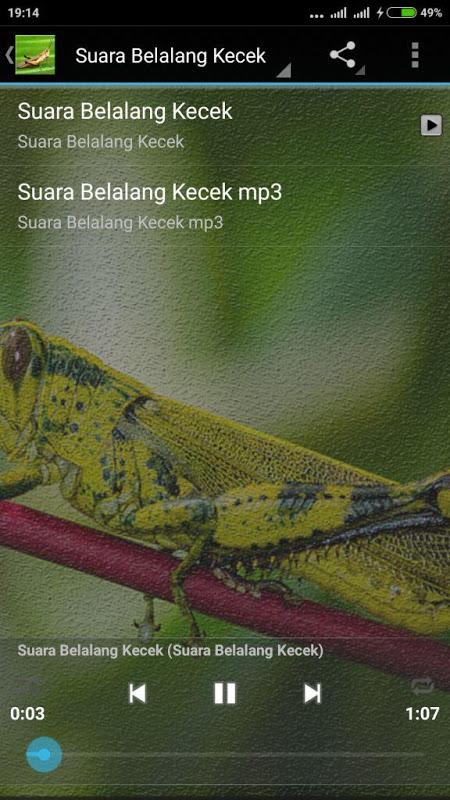 Suara Belalang Masteran Burung 1 0 Download Android Apk Aptoide