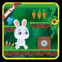 Rabbit Bunny running-Adventure