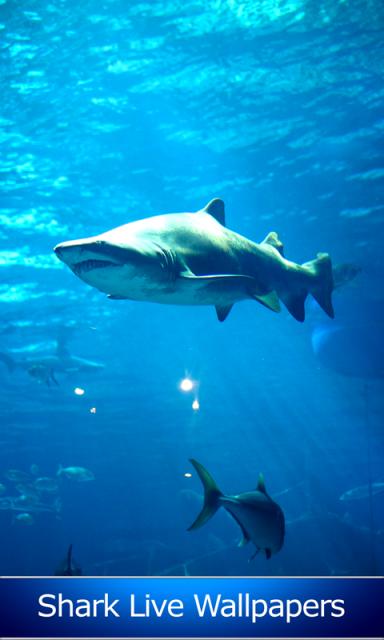 live shark wallpaper - photo #40