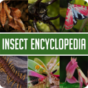Animal Encyclopedia of Insects