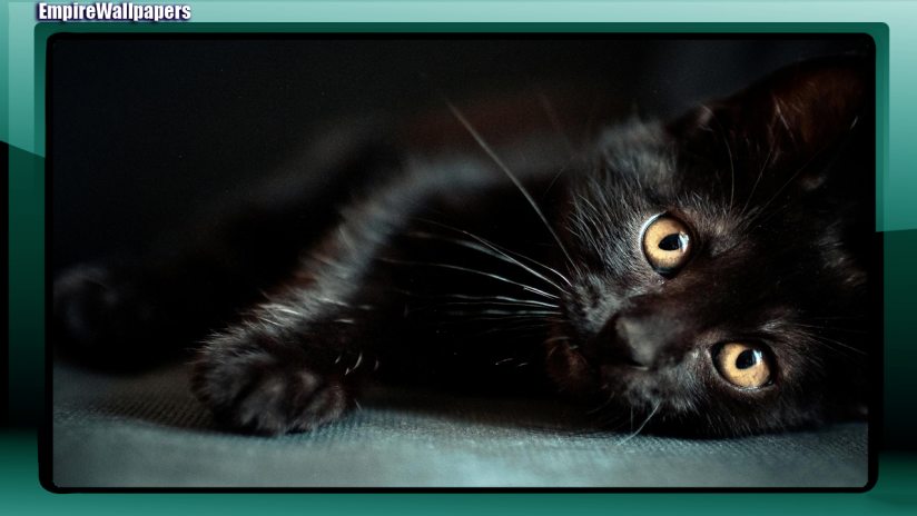 Black Cats Wallpaper 2 6 Telecharger L Apk Pour Android Aptoide
