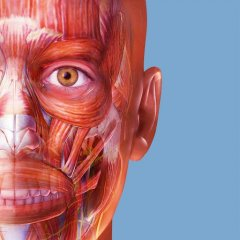 human anatomy atlas 2018 complete human body apk