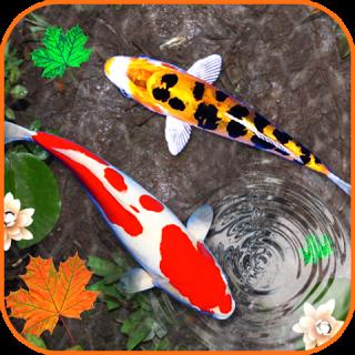 Unduh 540 Gambar Gerak Ikan Koi HD Terbaru