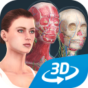 Human body (female) educational VR 3D
