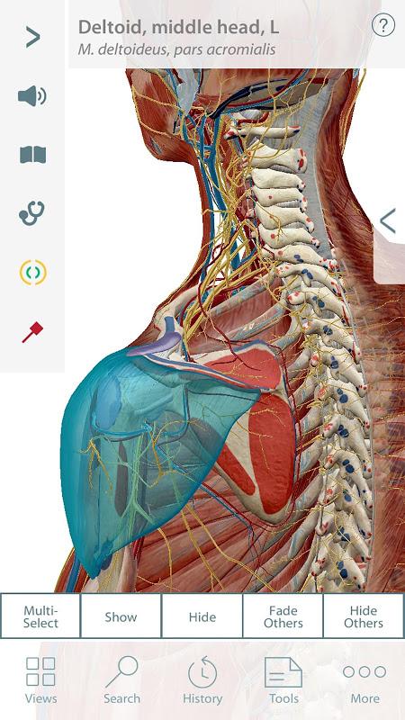 Muscle Premium - 3D Guide screenshot 1