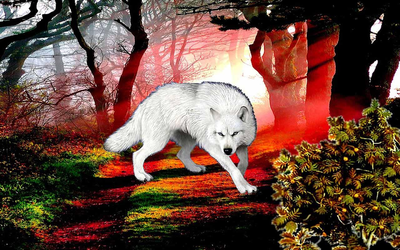 3D Wolf Wallpaper 1 0 Download Android APK