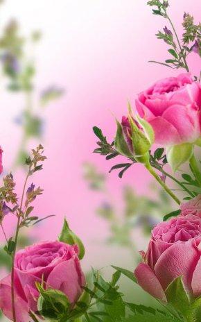 Flores Rosas Fondo Animado 2 1 Descargar Apk Para Android Aptoide
