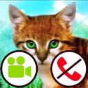 gefälschter Videoanruf der Katze