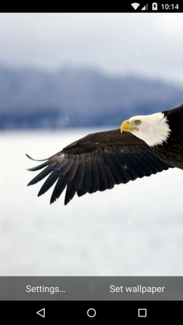 Eagle Live Wallpaper Hd Screenshot 1