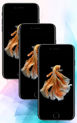 Betta Fish Live Wallpaper 1 1 Download Apk Android Aptoide