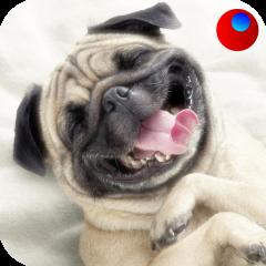 Bunyi anjing 1 0 Muat turun APK untuk Android - Aptoide