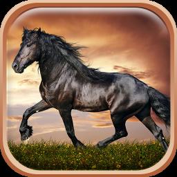 Cavalli Sfondi Animati Hd 13 Scarica Apk Per Android Aptoide