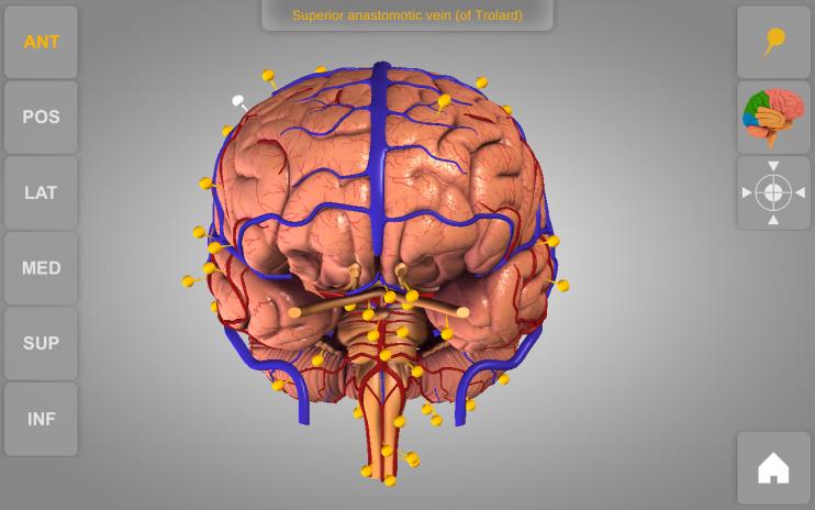 Brain 3d Anatomy Lite 103 Download Apk For Android Aptoide