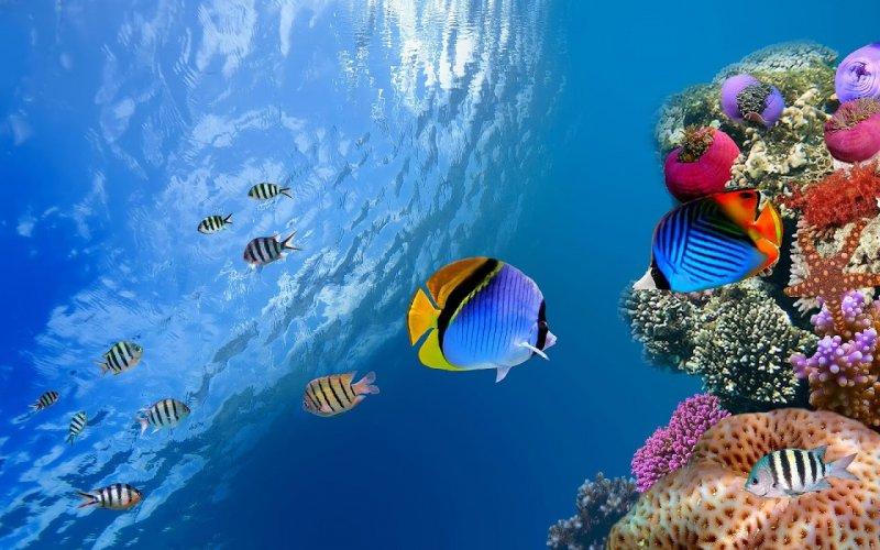 Aquarium Live Wallpapers Fish Tank Background 2 8 Download Android Apk Aptoide
