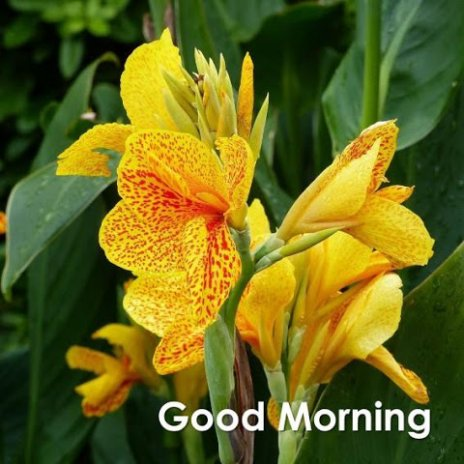 Good morning with flowers 31 download apk for android aptoide good morning with flowers screenshot 1 good morning with flowers screenshot 2 mightylinksfo