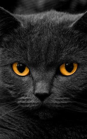 Anak Kucing Gambar Animasi 17 0 Unduh Apk Untuk Android Aptoide