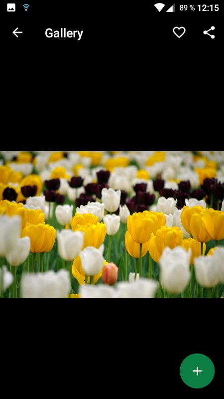 Fondos de primavera hd