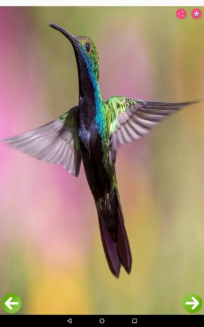 Birds Names with Pictures for Kids 2 0 Загрузить APK для