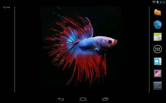 Betta Fish Live Wallpaper Free 206 APK