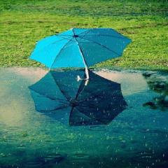 Blue Umbrella Live Wallpaper Icon