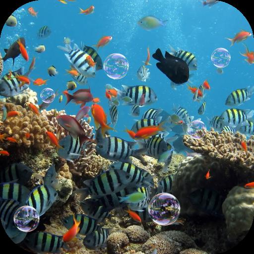 Fond D Ecran Anime Aquarium 3 0 Telecharger Apk Android Aptoide