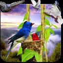 Birds Live Wallpaper 3D