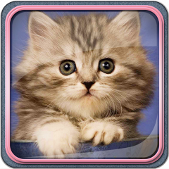 Download 101+  Gambar Animasi Kucing Hd Terlihat Keren Gratis