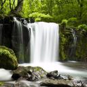Relax Foresta ~ Suoni della natura