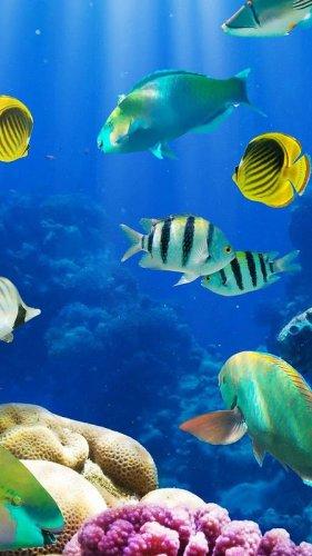 Akuarium Hidup Wallpaper Gambar Ikan Bergerak 2 7 Download Apk Android Aptoide