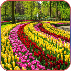 Hd Beautiful Garden Wallpapers 1 03 Download Apk For Android Aptoide
