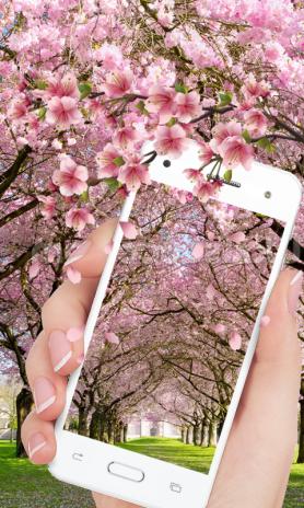 Hd Sakura Live Wallpaper 1 0 Telecharger L Apk Pour Android Aptoide